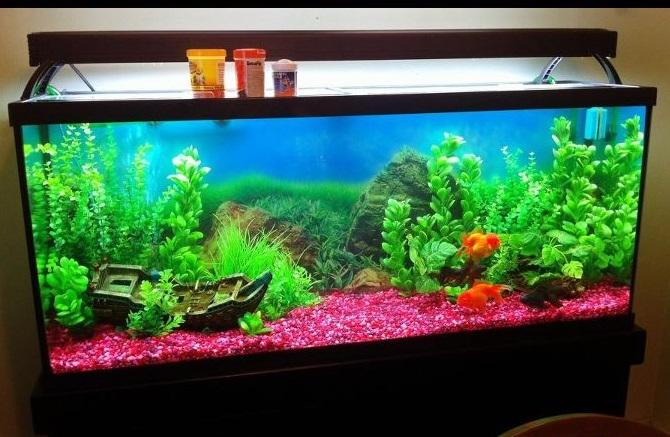 goldfishaquarium55