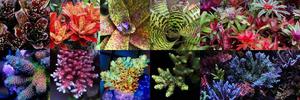 CoralPlantCollectibility