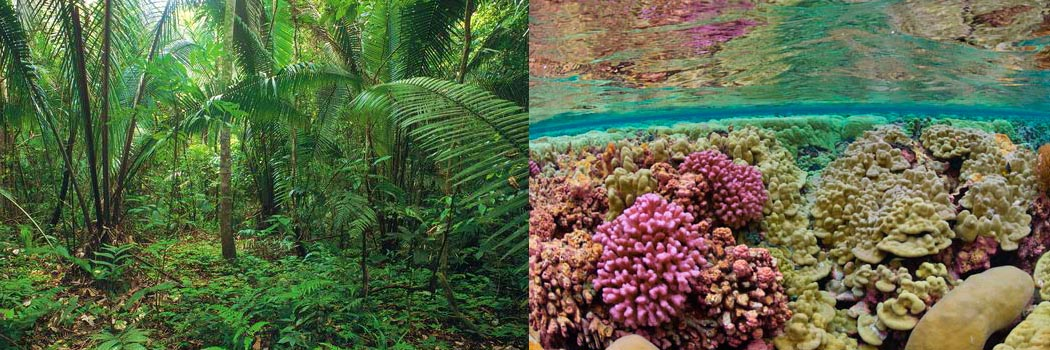 Ecosystem Parallel