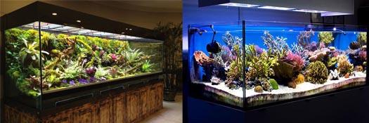 Large Reef Comparison