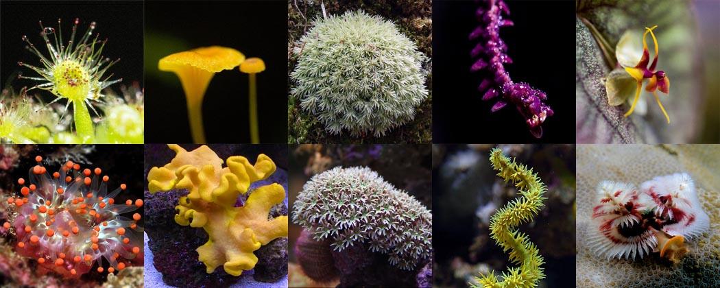 Plant Coral Comparison Master