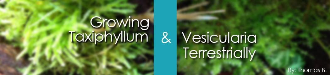 Growing Tax & Ves Moss